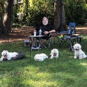 Woz-on-a-22dog-picnic22-from-left-to-right-Jewel-Ziggy-Zelda-Wozzie